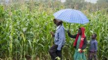 Rural farm in Zimbabwe